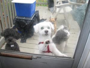 Doggies at Back Door Website