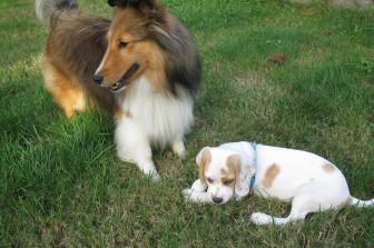 Vicky & Pup