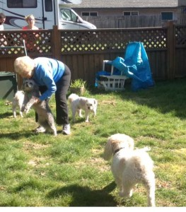 Blenda playing with the doggies in the back yard;