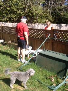 Raymond in the back yard with dogs taling over the fence to our neighbor.